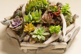 Sáng Tạo Vòng Hoa Trang Trí Vườn Đơn Giản Và Đẹp Lạ Từ Những Cây Mọng Nước
