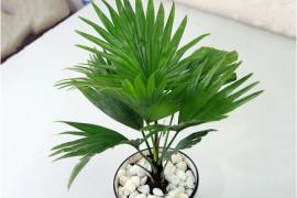 Chiêu tài hút lộc với cách trồng cây phong thủy trong khu vườn nhà bạn.